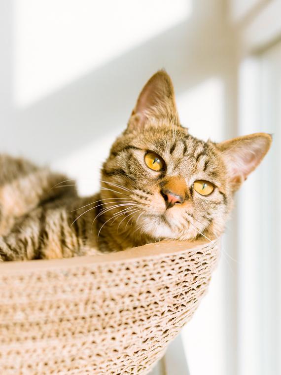 Salt: главное здесь, остальное по вкусу - Лайфхаки городского лета: как помочь котикам в жару