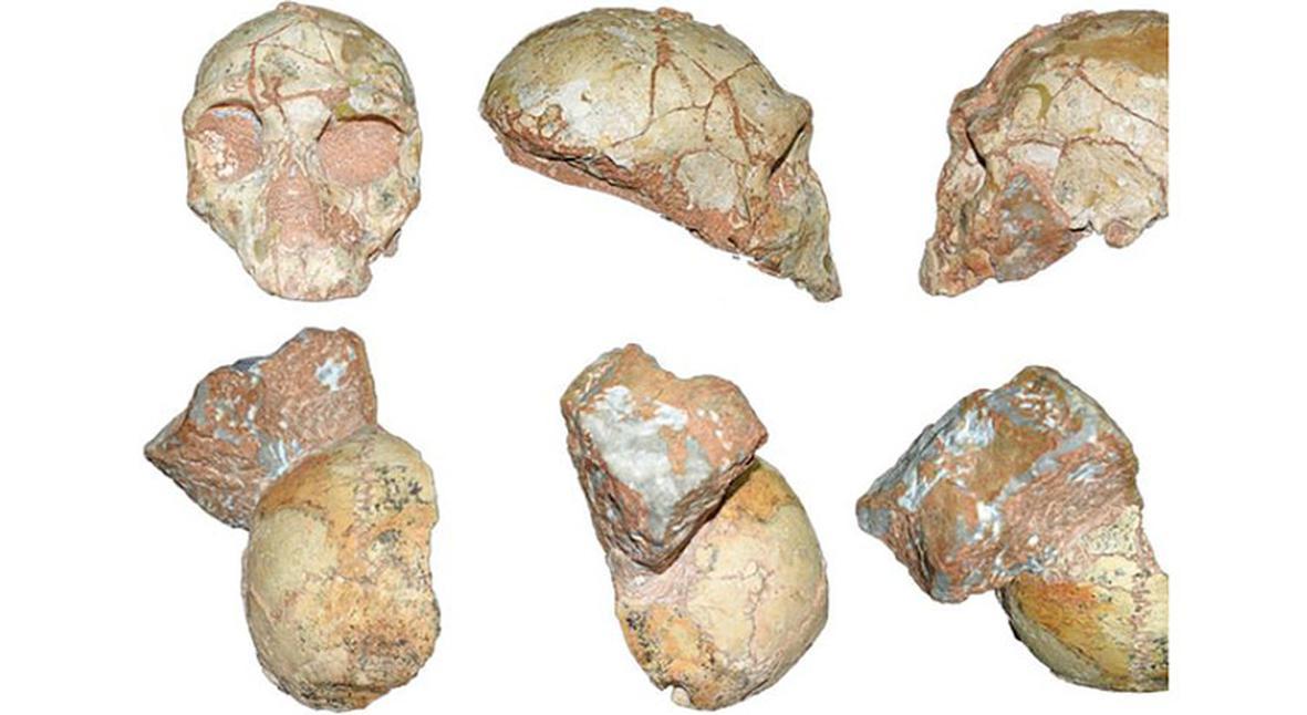 Salt: главное здесь, остальное по вкусу - Антропологи нашли древнейшие останки человека за пределами Африки
