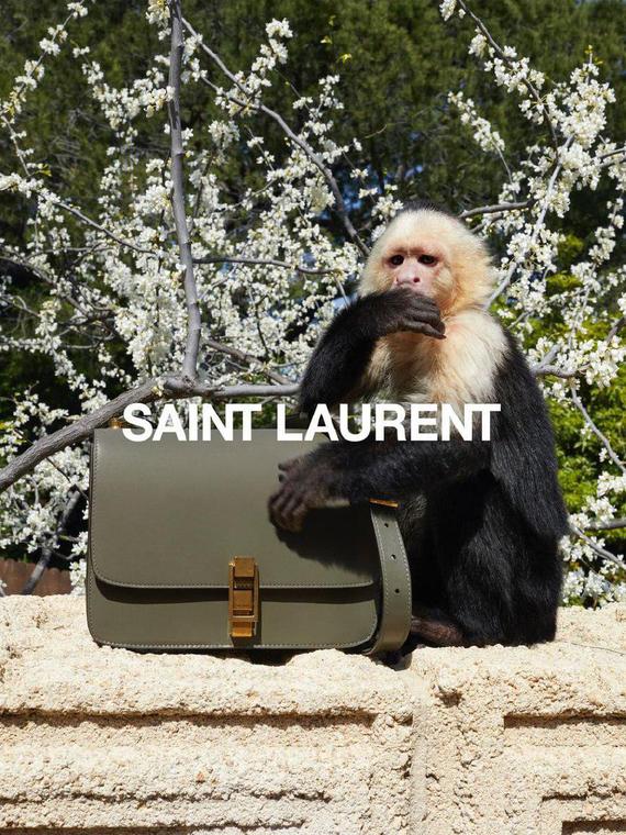 Salt: главное здесь, остальное по вкусу - Обезьянка Алли стала звездой рекламной кампании Saint Laurent