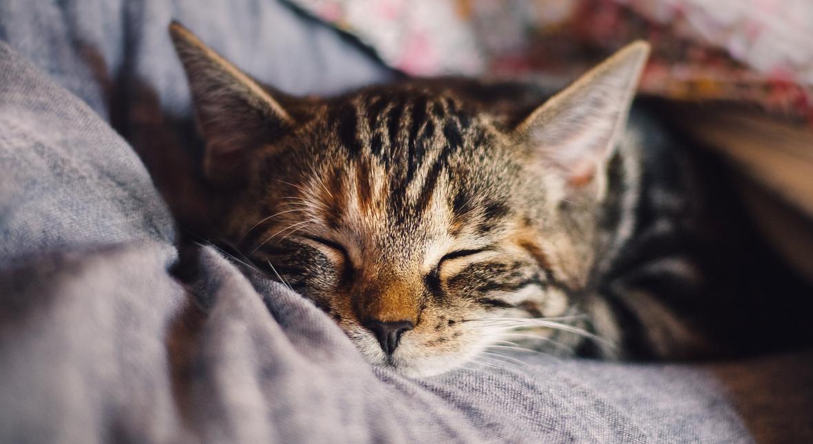 Salt: главное здесь, остальное по вкусу - Ученые разработали препарат, который делает кошек гипоаллергенными