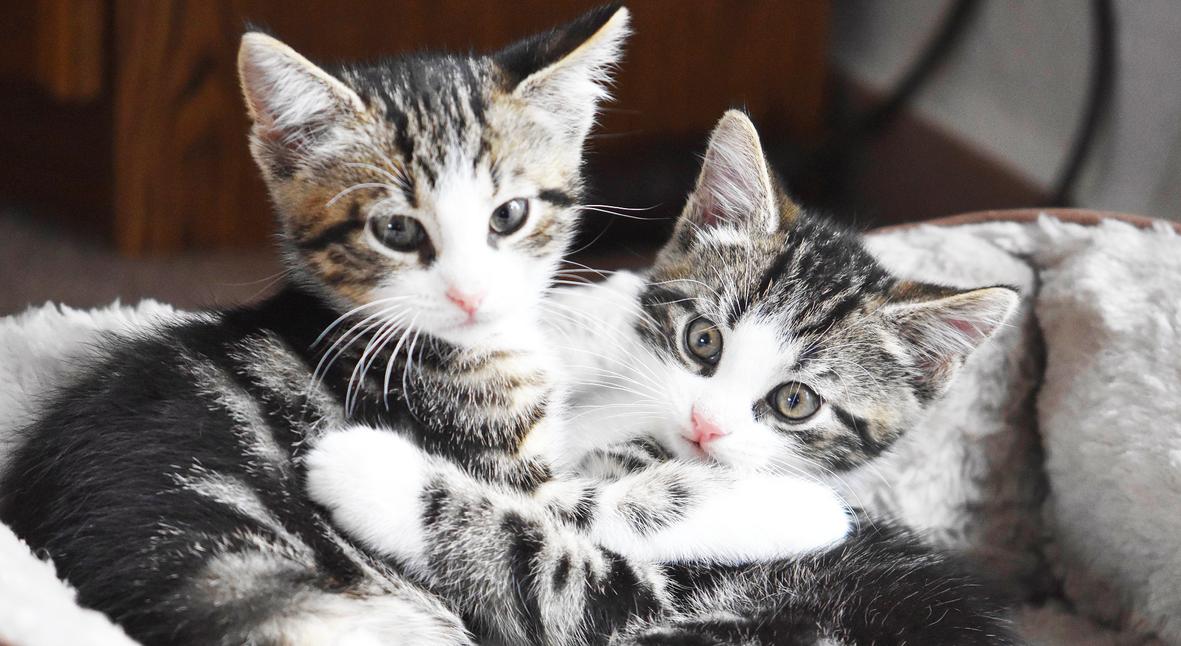 Salt: главное здесь, остальное по вкусу - Китайская компания Sinogene запускает услугу по клонированию кошек