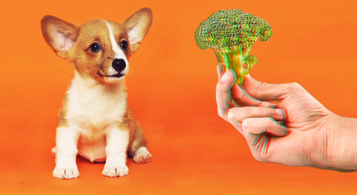 Salt: главное здесь, остальное по вкусу - Личинки, грибы и заменитель мышиного мяса: Как сделать из домашних животных веганов и чем их кормить