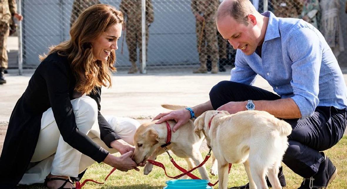 Salt: главное здесь, остальное по вкусу - Кейт Миддлтон и принц Уильям поучаствовали в дрессировке собак-саперов