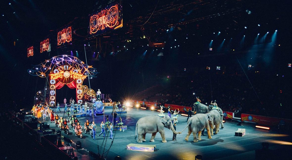 Salt: главное здесь, остальное по вкусу - Париж откажется от цирковых шоу с дикими животными