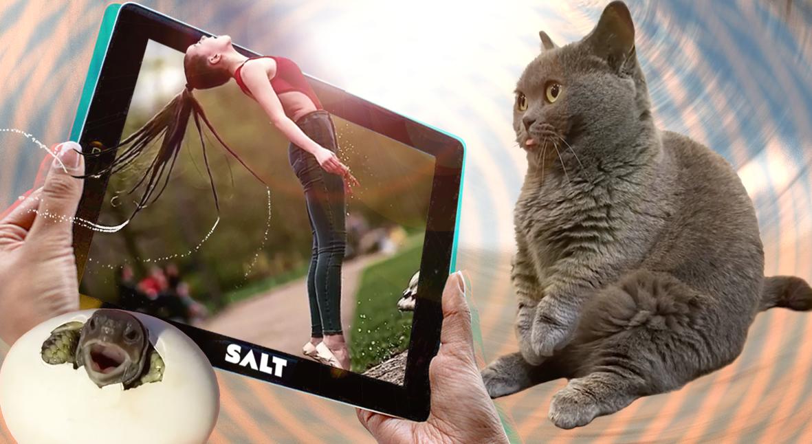 Salt: главное здесь, остальное по вкусу - Сиди и смотри: 10 смешных видео недели про пробки, сериалы и предательство