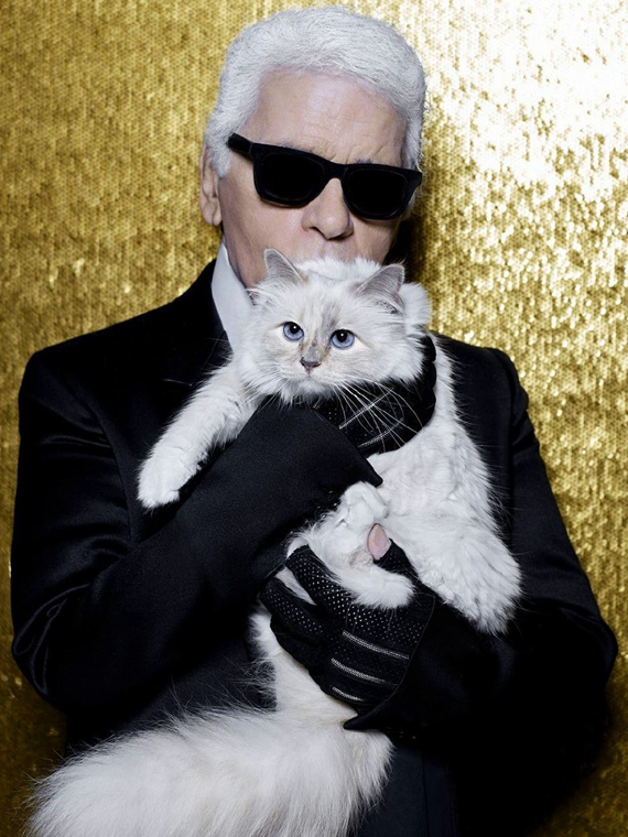 Salt: главное здесь, остальное по вкусу - Кошке Карла Лагерфельда посвятят фотокнигу