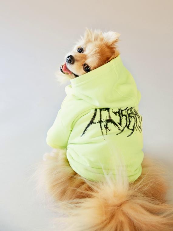 Salt: главное здесь, остальное по вкусу - Халат Versace и пуховичок Moncler Genius: на Ssense появилась одежда для собак