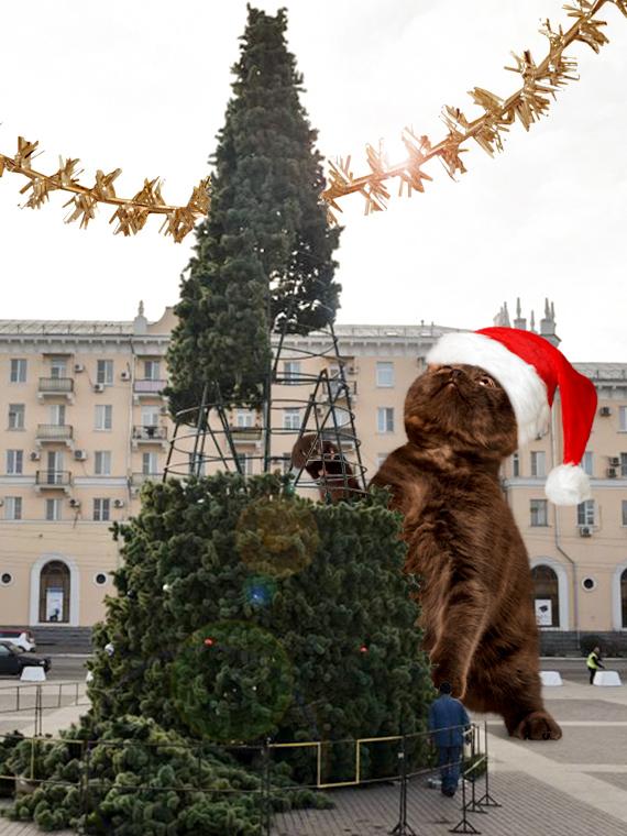 Salt: главное здесь, остальное по вкусу - Осторожно, елка: правила празднования Нового года в доме с котами