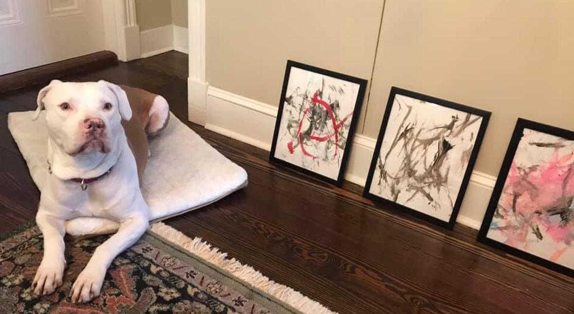 Salt: главное здесь, остальное по вкусу - Пес из приюта заработал $4000 — он рисует картины и помогает другим животным