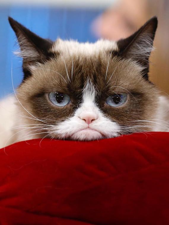 Salt: главное здесь, остальное по вкусу - Умерла Грампи Кэт — знаменитой кошке было 7 лет