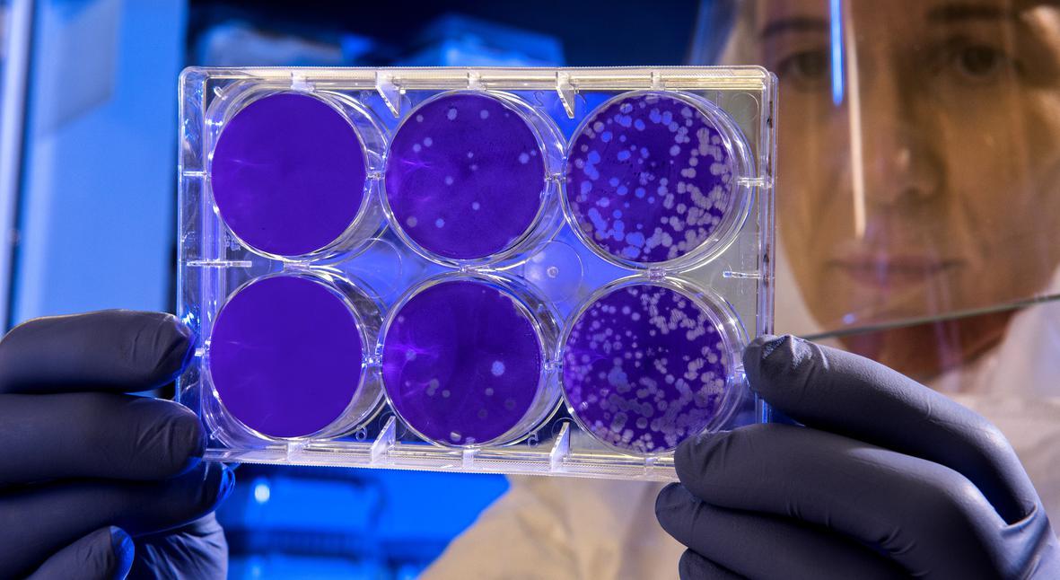 Salt: главное здесь, остальное по вкусу - В США зафиксирован первый случай заражения новым коронавирусом — число погибших в Китае выросло