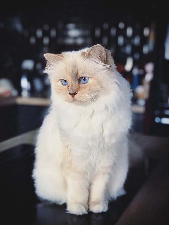 Salt: главное здесь, остальное по вкусу - Вышла онлайн-игра, посвященная кошке Карла Лагерфельда