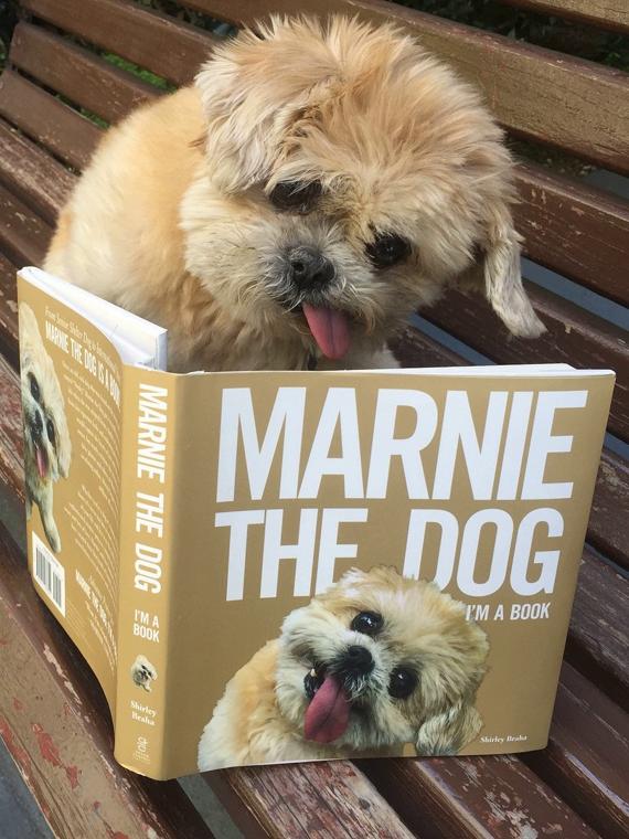Salt: главное здесь, остальное по вкусу - Умерла одна из самых известных собак интернета — ши-тцу Марни