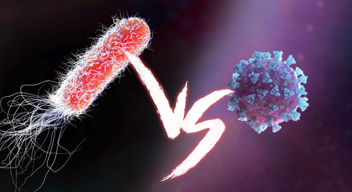 Salt: главное здесь, остальное по вкусу - Бактерии и вирусы: как поражают клетки организма, в чем разница и когда нужны антибиотики