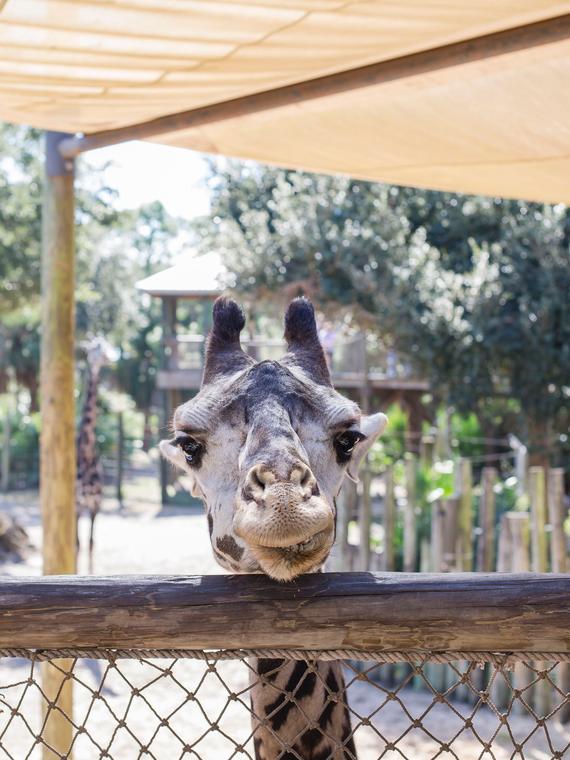 Salt: главное здесь, остальное по вкусу - Зоопарк Мельбурна запустил трансляции с животными — но всех покорил танцующий смотритель