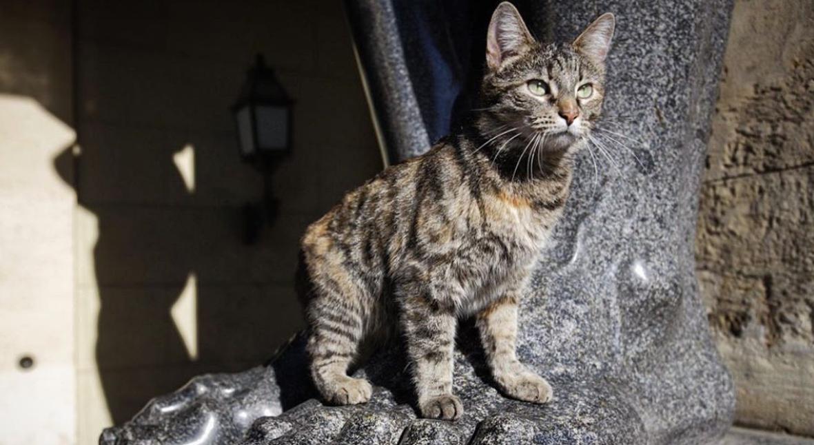 Salt: главное здесь, остальное по вкусу - На сайте Эрмитажа появились трансляции — теперь можно наблюдать за жизнью музейных котов онлайн