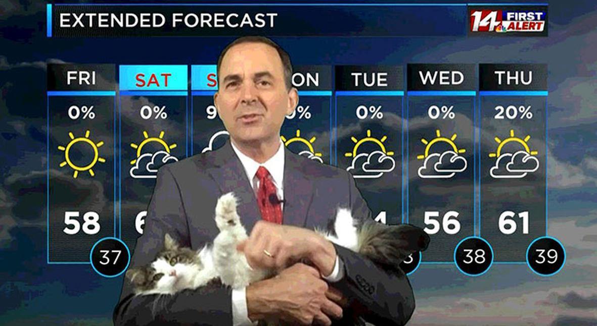 Salt: главное здесь, остальное по вкусу - В США ведущий прогноза погоды начал работать из дома — теперь он ведет эфиры со своей кошкой