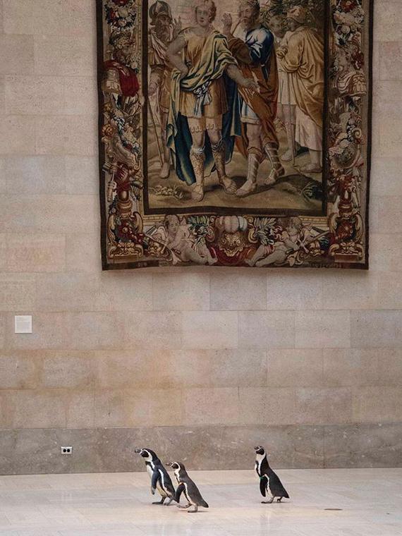 Salt: главное здесь, остальное по вкусу - В США пингвины побывали на экскурсии в музее — им приглянулась живопись барокко