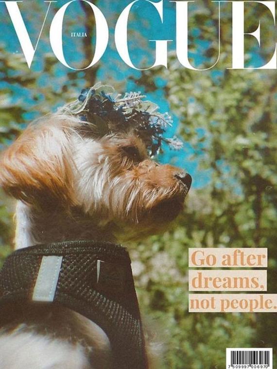 Salt: главное здесь, остальное по вкусу - В Сети собак делают звездами Vogue — питомцев помещают на обложку журнала