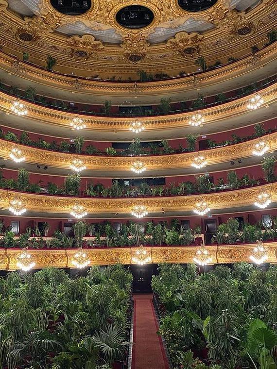 Salt: главное здесь, остальное по вкусу - Испанский оперный театр дал первый концерт — зрительские места заняли более двух тысяч комнатных растений