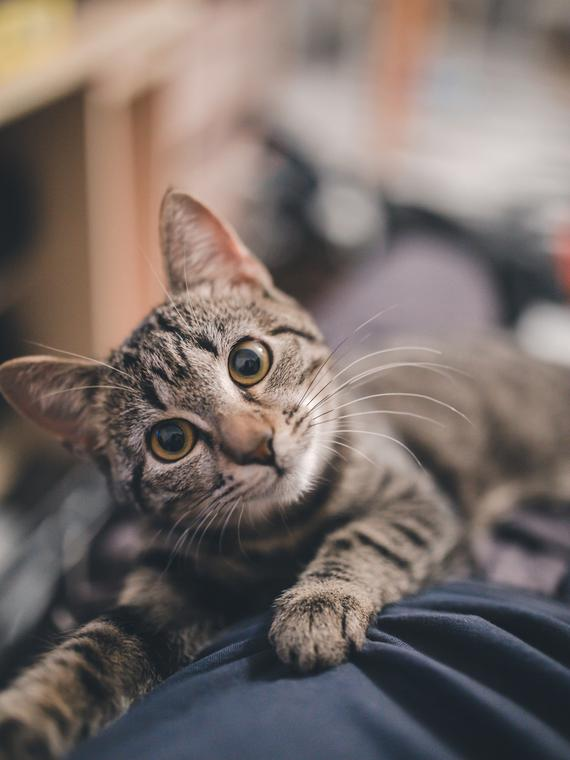Salt: главное здесь, остальное по вкусу - Японская полиция наградила кошку, которая помогла спасти жизнь человеку