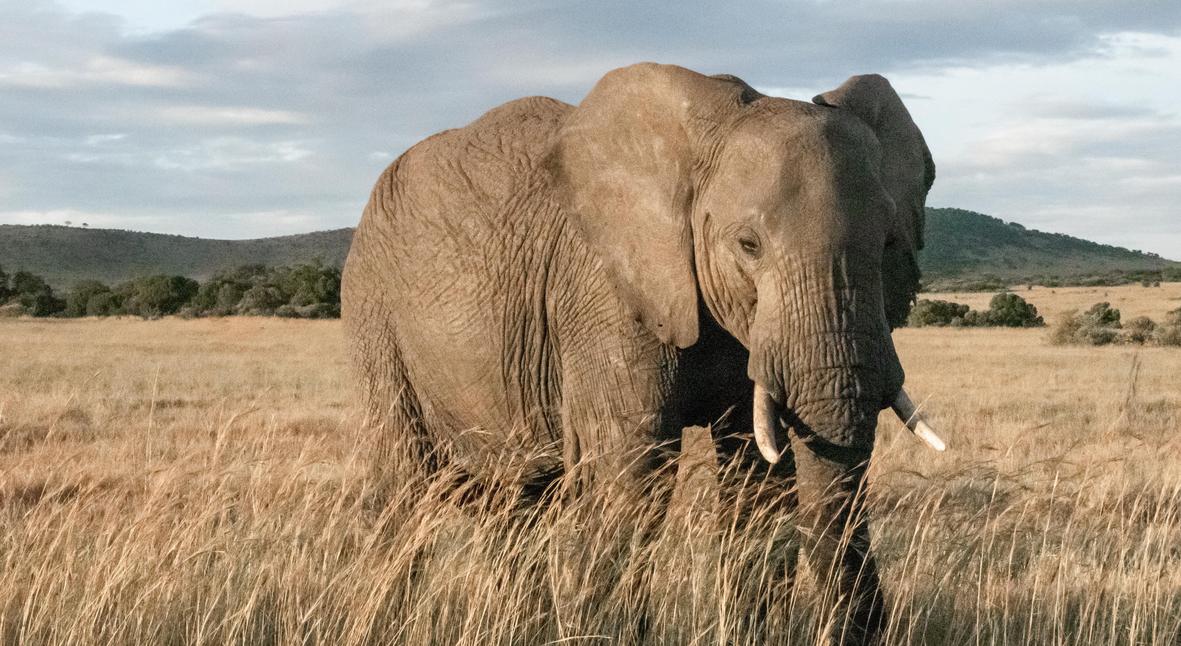 Salt: главное здесь, остальное по вкусу - В Ботсване по неизвестным причинам погибли более 350 слонов