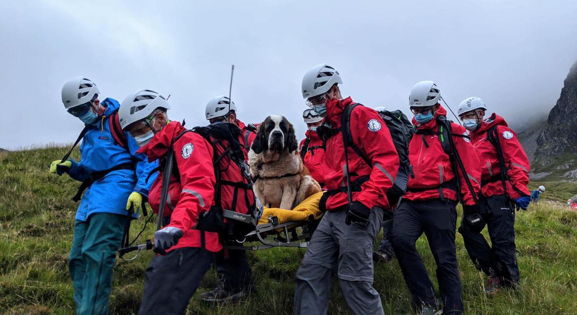 Salt: главное здесь, остальное по вкусу - Спасатели помогли сенбернару, у которого заболели лапы на спуске с самой высокой горы в Англии