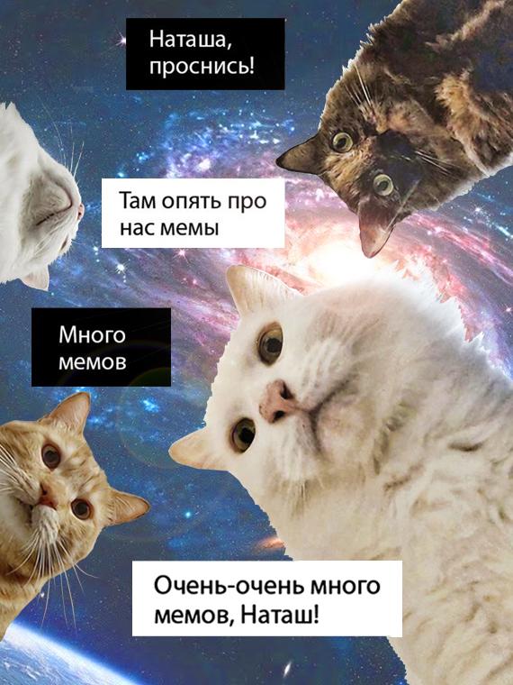 Salt: главное здесь, остальное по вкусу - 80+ лучших мемов с котами