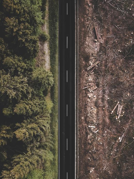 Salt: главное здесь, остальное по вкусу - Ученые предупредили, что нескончаемая вырубка деревьев может привести к гибели человечества